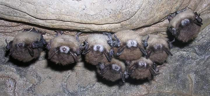 #discoverSFNHT Discover nature at Fort Larned National Historic Site -- watch for the bats!