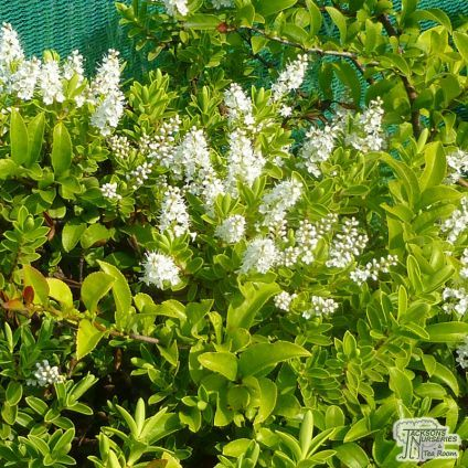 158 Best Trees And Shrubs Images On Pinterest