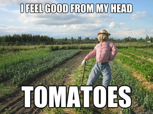 Dying: Giggle, Puns, Scarecrow, Funny Stuff, Humor, Funnies, Garden
