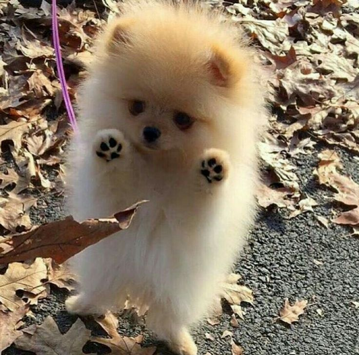 Look at them paws. I mean, LOOK at them!!!