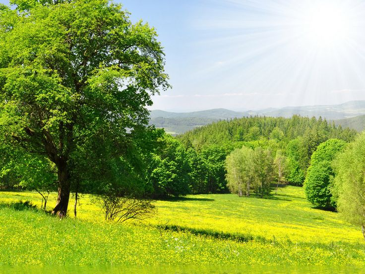 Grass Scenery Landscape