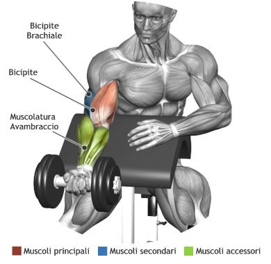 Curl alla Scott for fitness videos check out https://www.youtube.com/user/MixonFit/videos