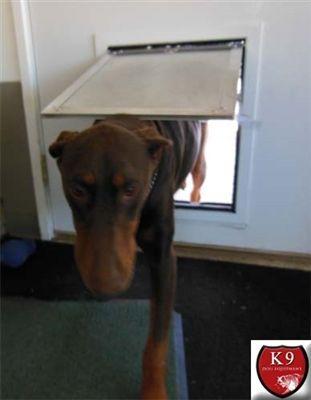 19 Best Dog Doors For Doors Images On Pinterest Pet Door A Dog