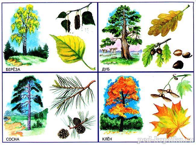 Obrázky stromů pro děti