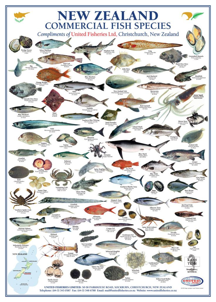 Downloadable New Zealand Commercial Fish Species