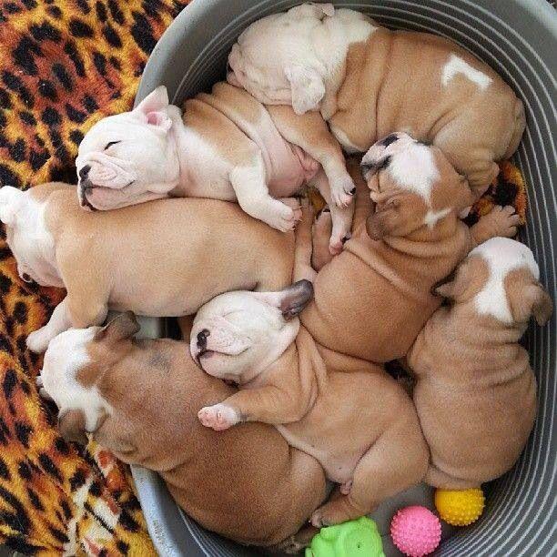 Puppies!..we love then