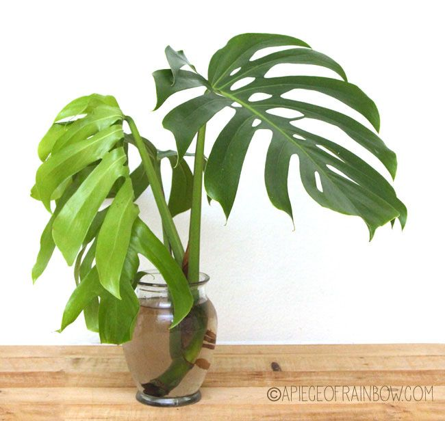 12 easy indoor plants for beauty clean air the california beauty and tropical - Indoor plant name ...
