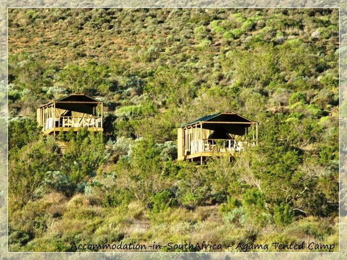 Tented accommodation Namaqualand. Accommodation at Agama Tented Camp. Namaqualand accommodation. Accommodation in Namaqualand.