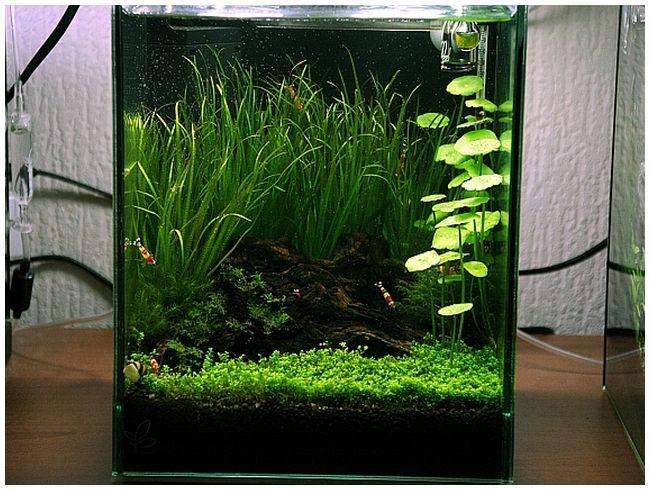 Наноаквариум, аквариум 10 литров, запуск по ADA, ADA