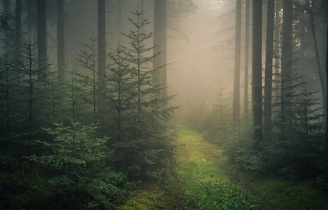 Mysterious Forest in 2021   Black forest germany, Forest background, Forest  wallpaper