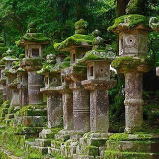 Lanternas de Pedra guiam o caminho para o Santuário Kasuga Taisha na cidade antiga de Nara - Japão. (Foto por : Wistou - Flicker)  #Nara #Japan #Santuário #kasugataishasrine #KasugaTaisha #sanctuary #ancientCity #Turismo