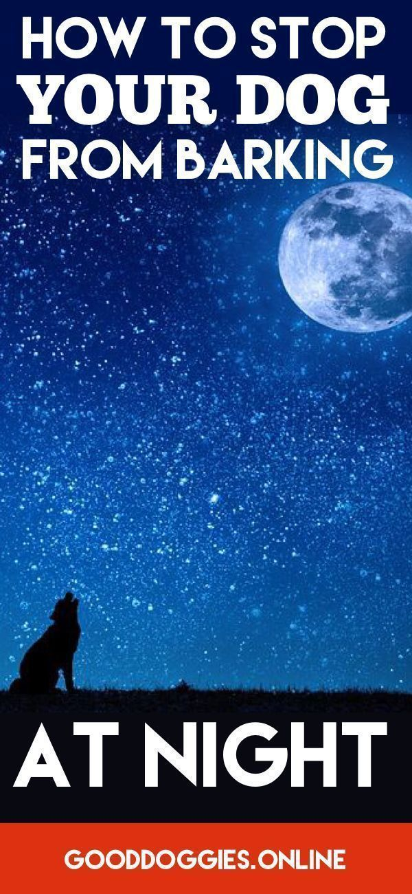 Learn tips on how to stop your dog barking at night. #DogBarking