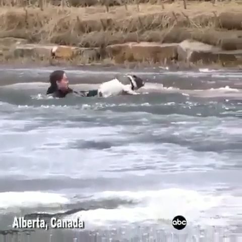 OMG that girl saved the puppy from frozen water