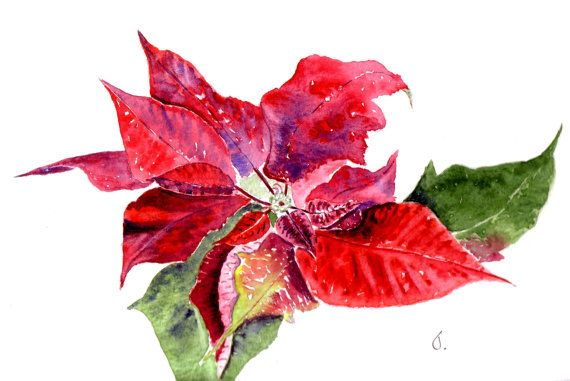 Poinsettia Watercolor Christmas Cards, Watercolor Holiday Cards, Greetings Cards, Blank Notecard Sets, Nature Art Card