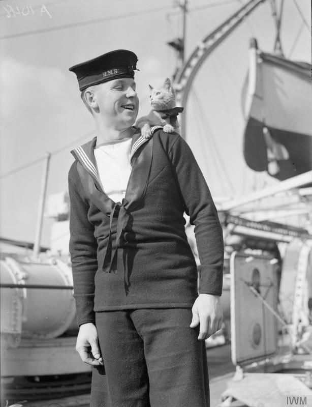 """Halifax"" the cat came aboard while the US destroyer (now transferred to the Royal Navy) was in a Canadian port. Halifax was the ship's mascot and wore an HMS cap ribbon round his neck. Oct. 1940"