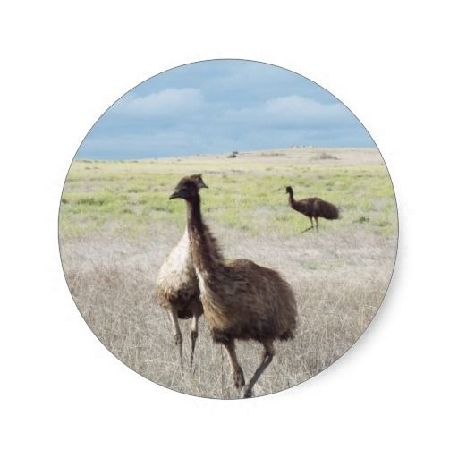 three emu's