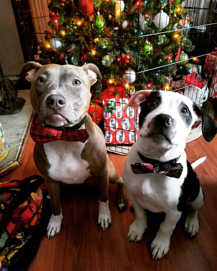 My babies already for their presents last Christmas. http://ift.tt/2CLASog