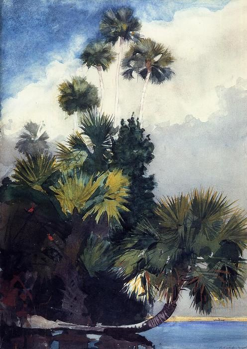 Palm Trees, en Floride, aquarelle de Winslow Homer (1836-1910, United States)