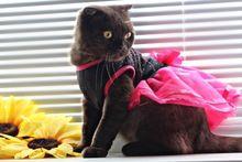 Tienda Online Mascotas Ropa Para Perros Vestido de Encaje Tutu Princesa Elegante Vestido de Chihuahua Rojo encantador Lindo Gato Ropa de Artículos Para Fiestas Para Fuentes Del Perro mascotas   Aliexpress móvil