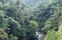 Bosque Andino : El bosque andino crece en la franja de clima frío y sus temperaturas puedenbajar mucho en la noche. Algunos bosques andinos crecen en zonas montañosas donde casitodo el tiempo se encuentran nubes: estos bosques son muy húmedos y se los conoce comobosques de niebla andinos. Otros bosques andinos pueden crecer en zonas secas, donde vansiendo reemplazados por matorrales semiáridos