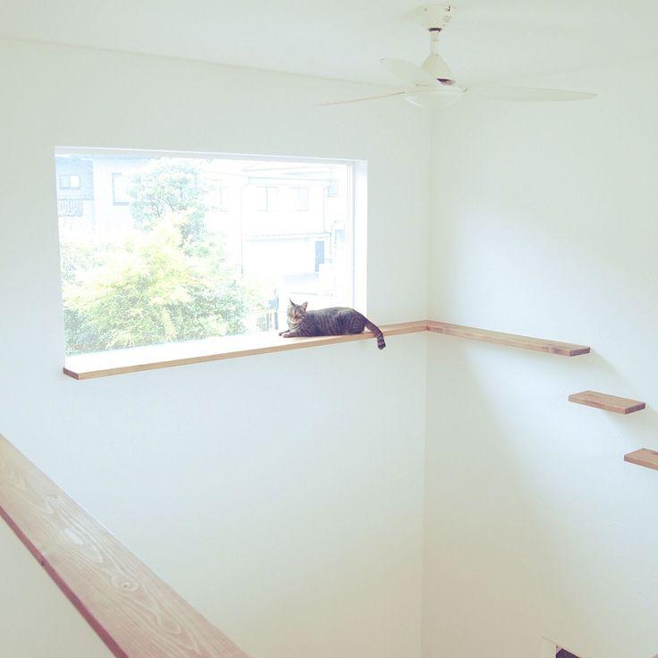 猫のいる日常/キャットウォーク/壁/天井のインテリア実例 - 2015-04-22 08:53:35 | RoomClip(ルームクリップ)