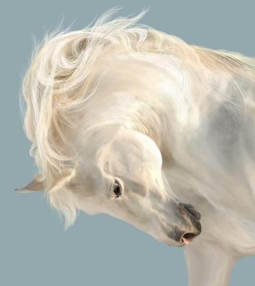 Magnificent white...Beautiful Hors, Pets, Castles, White Horses, Bows, Equestrian, Unicorns, Animal, Arabian Horses