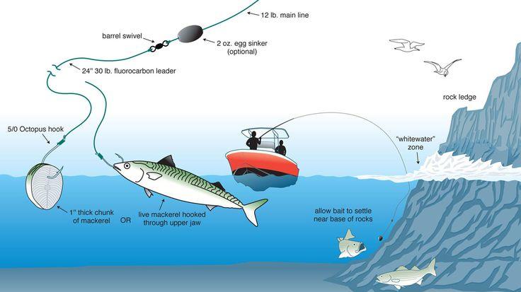 fishing fish maine rigs rig water coast surf saltwater trolling boat open bottom bait bass mackerel line stripers salt chunk