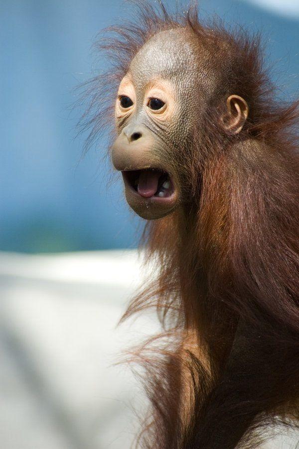 Картинки ржачные с обезьянами