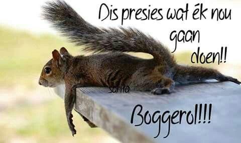 Boggeroll!!!!!