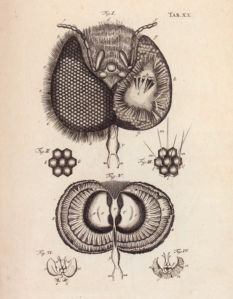 The drawing, above, of the head of a male bee, is in a book from Charles Darwin's personal library