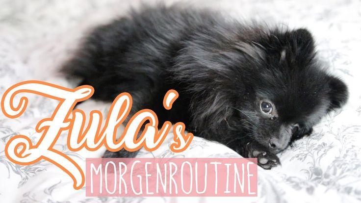 Zula's MORGENROUTINE ( Pomeranian ) | Dagi Bee