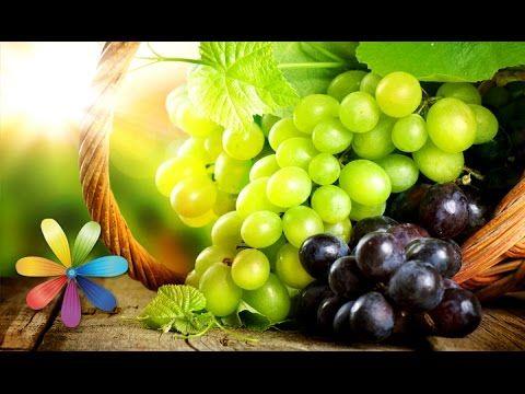 Виноград. Польза и вред для организма