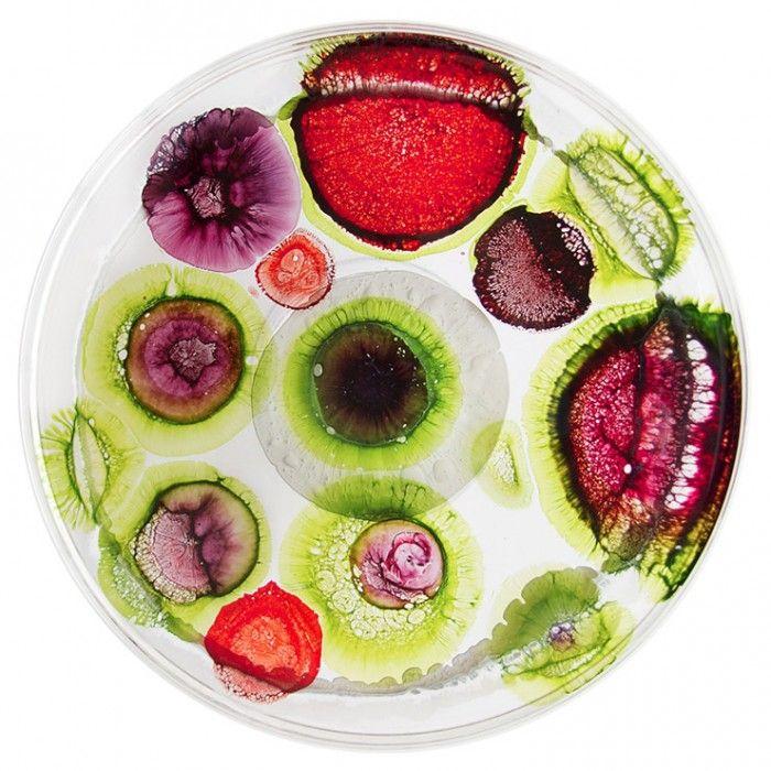 Wonder Science   Klari Reis. Would love these as plates.