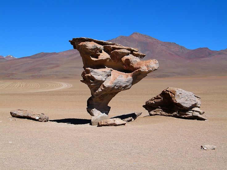 Stone Tree in the Bolivian Highlands.