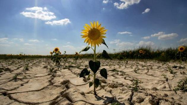 El año que viene habrá una hambruna en todo el mundo, según la ONU