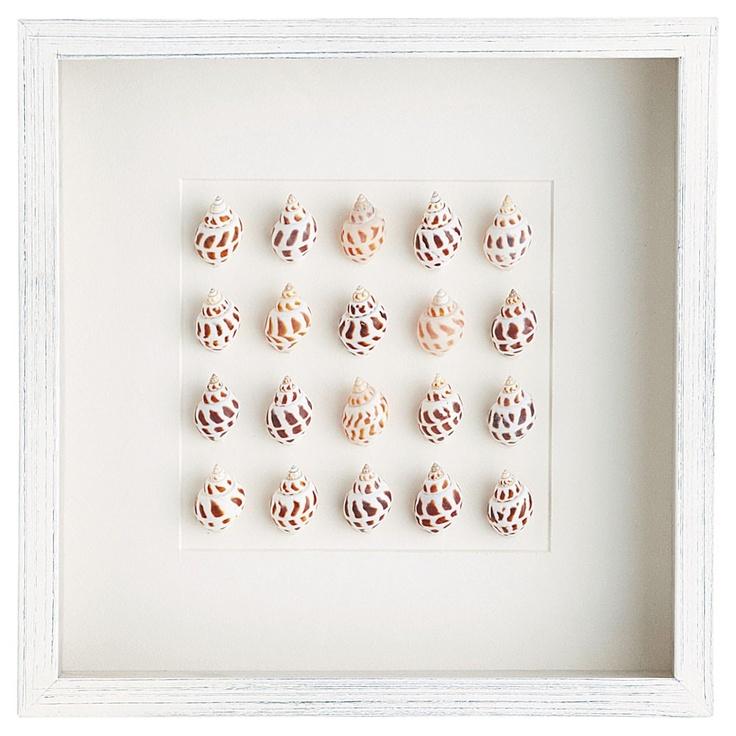 Cadre coquillages