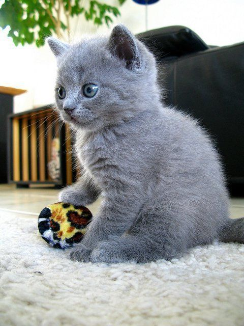 """""""This toy for me?"""""""