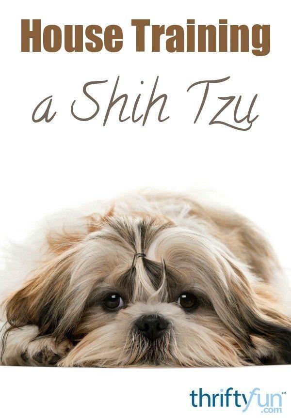 Cute Puppies Wallpaper Shih Tzu