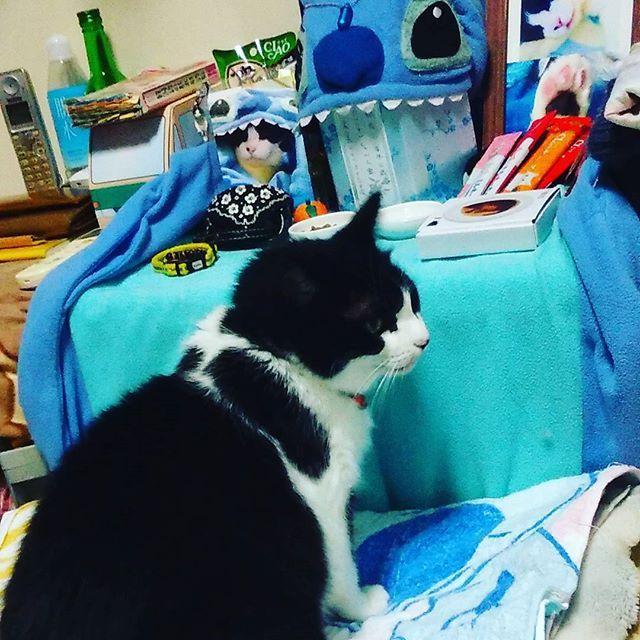 風呂上がりに見た光景(´;ω;`) #クロ #リキの母猫  #泣ける #親子だね  #猫 #CAT #고양이  #愛猫 #ハチワレ白黒MIX親子