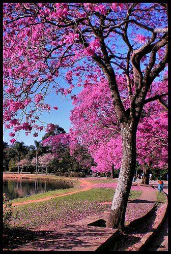 Parque do Ibirapuera - São Paulo, Brasil