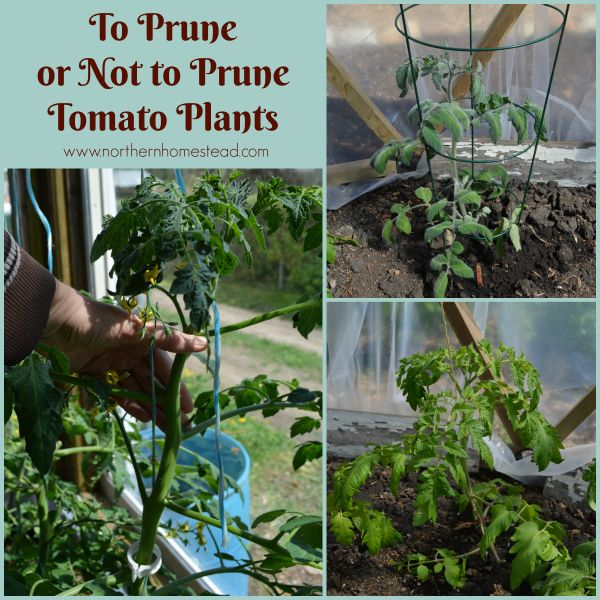 1328 best vegetable gardens images on pinterest - Best tomato plants for container gardening ...