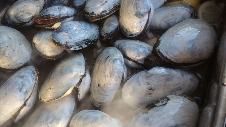 how to cook clams with shell
