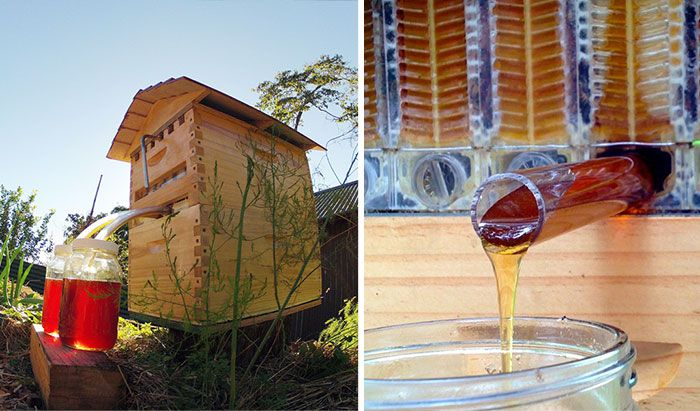 This Amazing New Beehive Design Allows You To Have Raw Honey On Tap