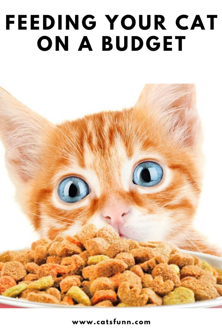 Feeding Your Cat On A Budget Cats Funny In 2020 Cat Behavior Cat Care Funny Cats
