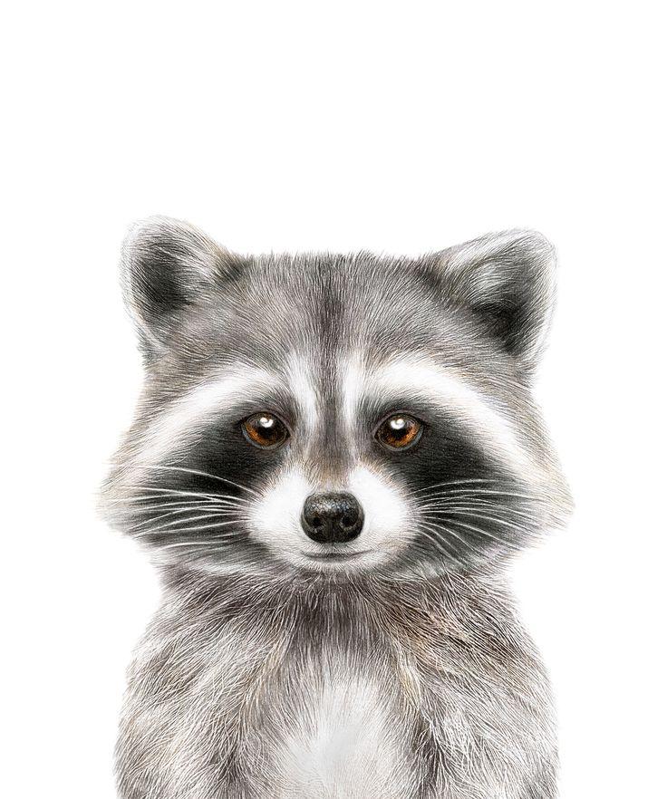 Raccoon Print Woodland Baby Animals Nursery Animal Print