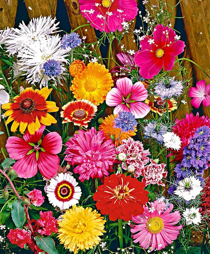 Both inside and outside enjoy beautiful flowers! The 'Cut flower Mix' is a richly flowering mixture that produces large quantities of flowers for cutting. This must surely be the quickest and easiest way to create bright, colourful beds and borders in the garden. There is no need to scatter loose seeds. These seed mats can simply be dug into the ground and covered with soil. A glorious mixture of varieties for a characteristic English-style garden.