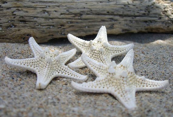 Starfish Hair Clips BarrettesSet of 3 Petite by sandnsurfcreations, $21.00