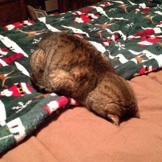 """""""I shouldn't have eaten all that ice cream."""" 