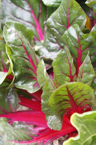 Red chard practically glows!