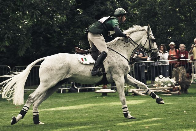 57 Best Equine Cross Country Images On Pinterest Horses